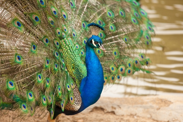 The Most Colourful Animals in the World